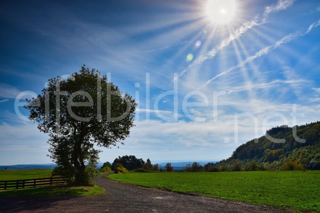 sunny day   Landschaft am Mosenberg (Eifel, Vulkaneifel)