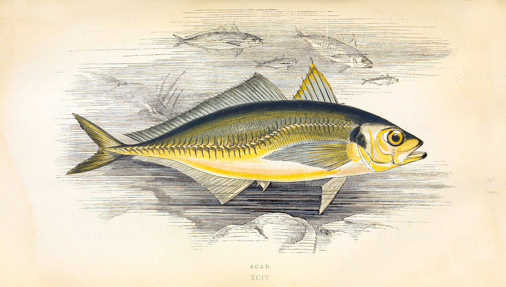 A-History-of-the -Fishes- of- the- British-Islands-Fische-1862-1866 (1)
