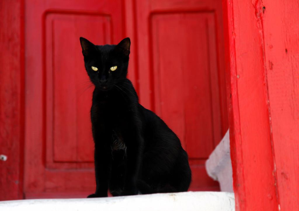 JT-110809-141 | Schwarze Katze, mit gruenen Augen, vor einer roten Tuere