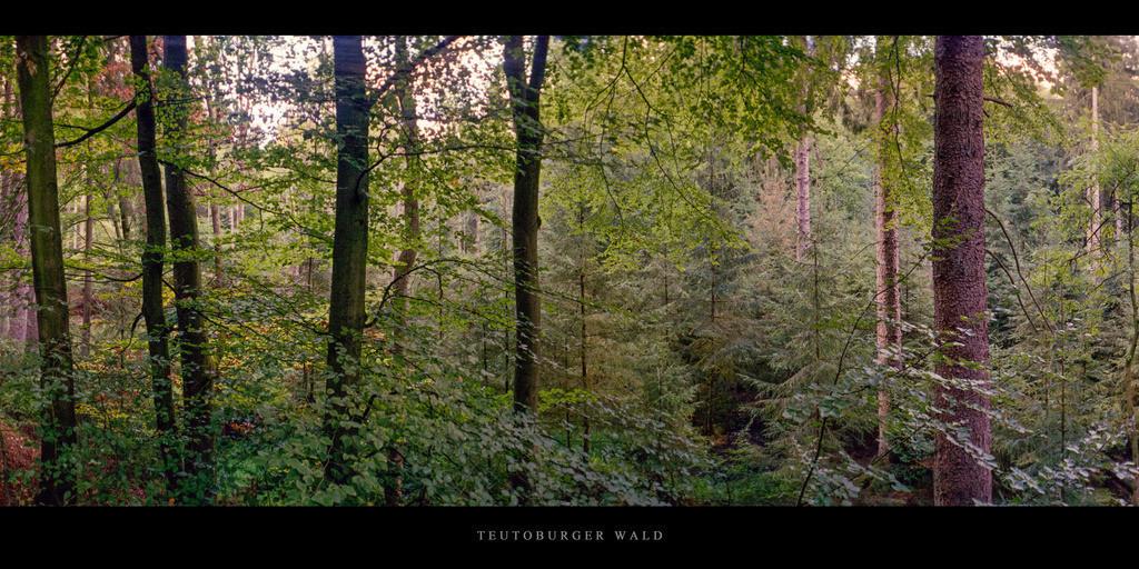 Teutoburger Wald   Mischwald mit Buchen und Fichten im Teutoburger Wald