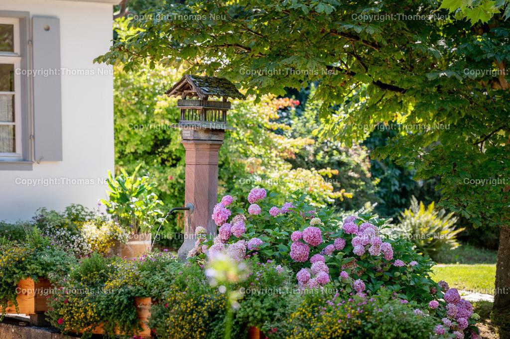 DSC_6956 | bbe, Staatspark Fürstenlager, Parkanlage, Hessen, Bensheim-Auerbach,,Brunnen mit Hortensien,  Bild: Thomas Neu