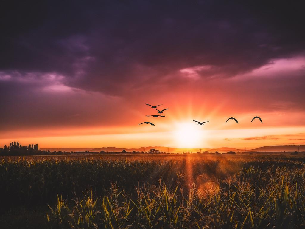 Sonnenaufgang im Ried