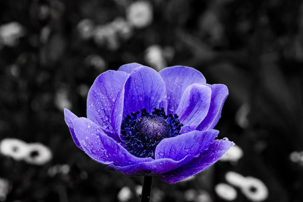 Farbe in der Dunkelheit | Farben sind das Lächeln der Natur und Blumen sind ihr Lachen.