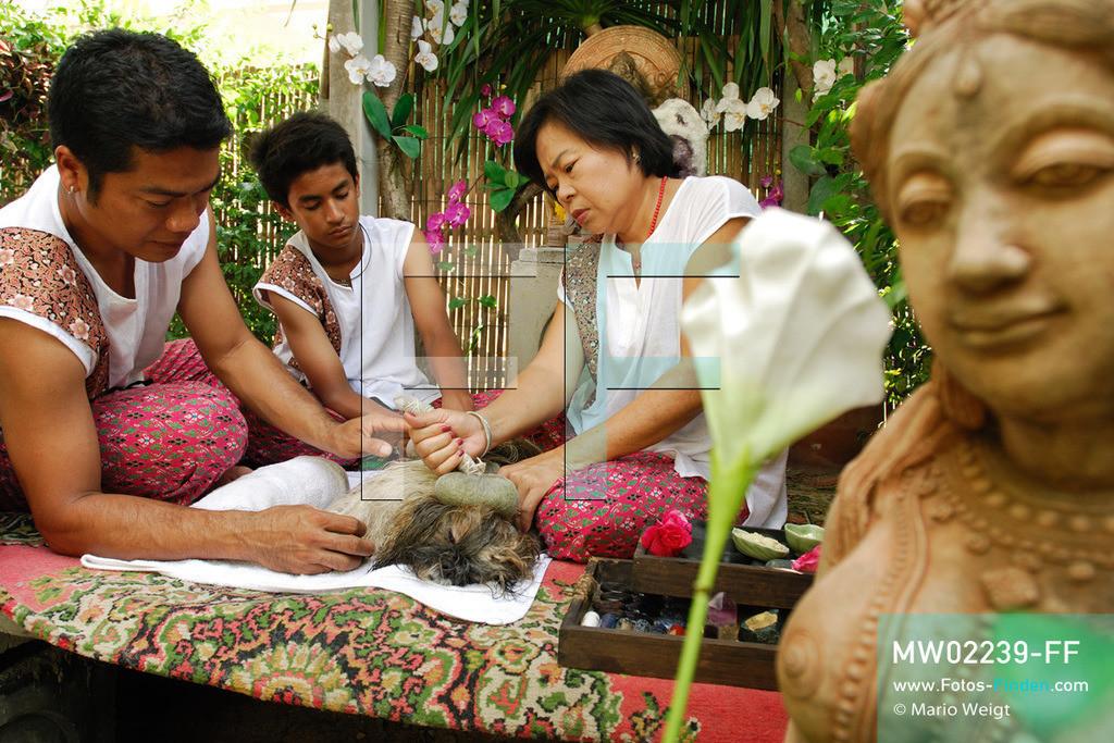 MW02239-FF | Thailand | Bangkok | Reportage: Wellness für Hunde | Das Indo Thai Dog Spa wird von Herrn Jare Jansrisuriyawong geführt. Er bietet verschiedene Blütenbäder, Steinmassagen und Kräuterbehandlungen für Herrchens und Frauchens Liebling an. Shih Tzu Dollar erhält eine Kräuterstempelmassage. Chef Jare hilft dabei seinen Therapeuten Frau Boonsom und Herr Nattawut.  ** Feindaten bitte anfragen bei Mario Weigt Photography, info@asia-stories.com **