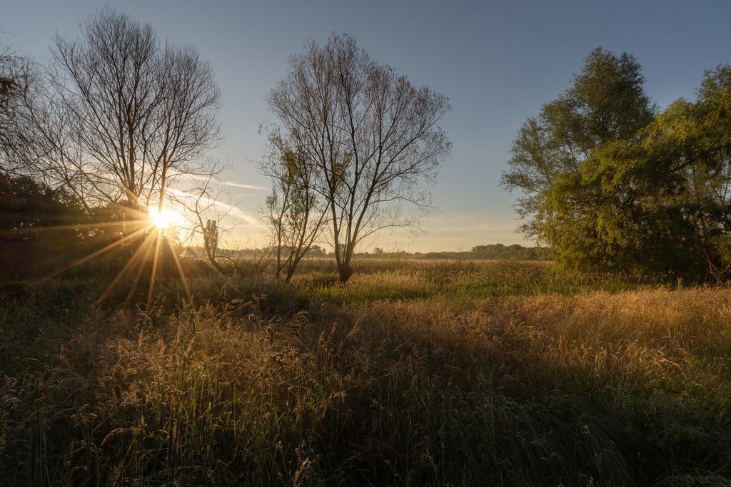 Sunrise Allerpark Sonnenstern im Naturschutzgebiet