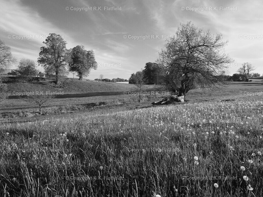 Frühlingswiese in der Abendsonne | Vogelsberg