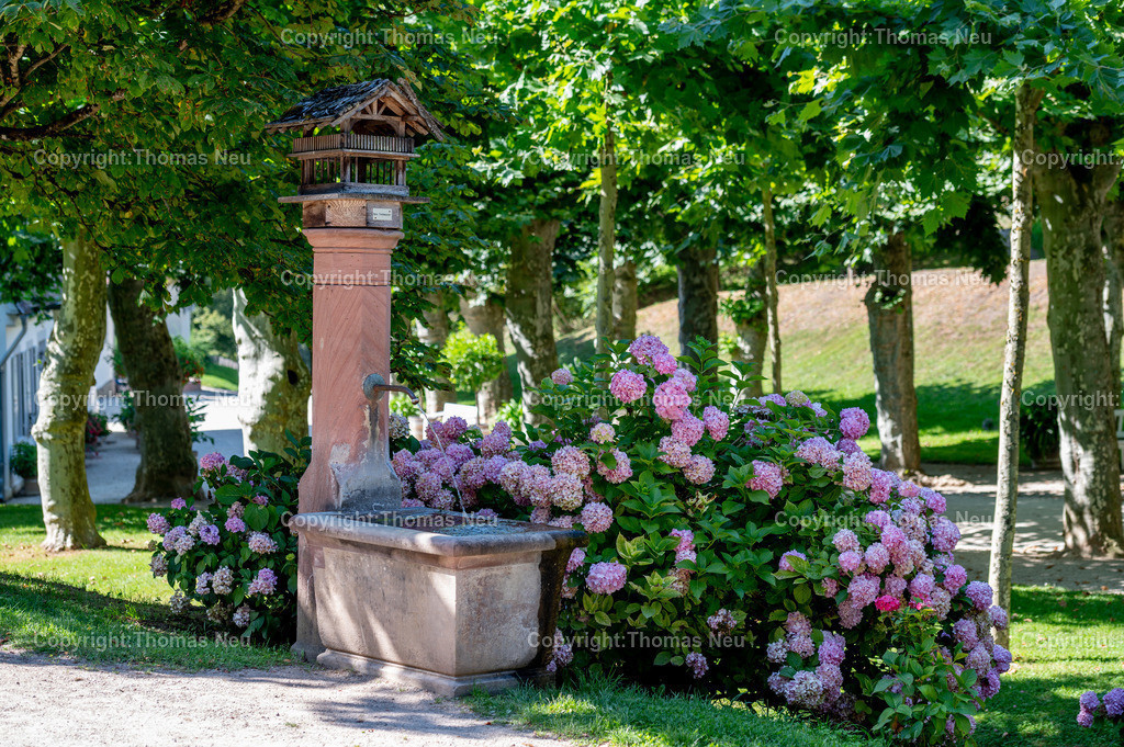 DSC_6961   bbe, Staatspark Fürstenlager, Parkanlage, Hessen, Bensheim-Auerbach,,Brunnen mit Hortensien,  Bild: Thomas Neu