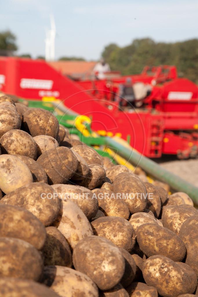 20110929-IMG_6001 | Ernte auf einem Kartoffelfeld - AGRARBILDER