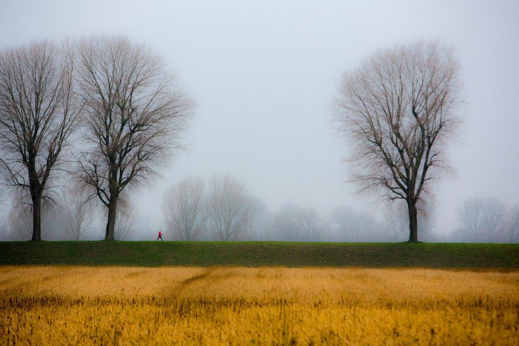 JT-130225-030   Tristes Winterwetter, Nebel, kahle Bäume, Rheindamm bei Düsseldorf-Stockum. Frau beim Walken, mit Walking-Sticks.