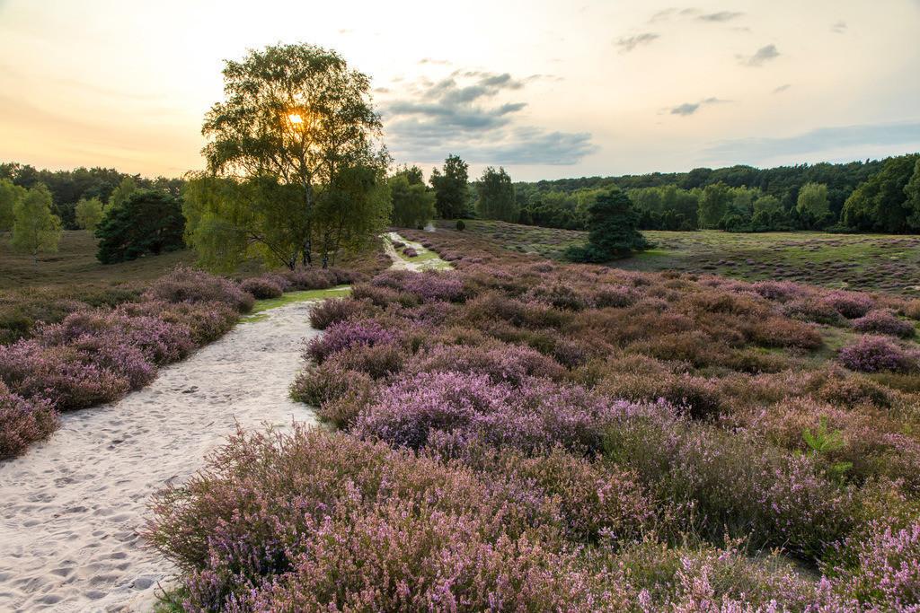 JT-171112-086 | Die Westruper Heide, im Naturpark Hohe Mark Westmünsterland, bei Haltern, Heideblüte,