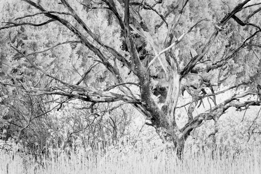 Dead Tree | Analogfotografie mit einer meiner mindestens 50 Jahre alten Kameras.