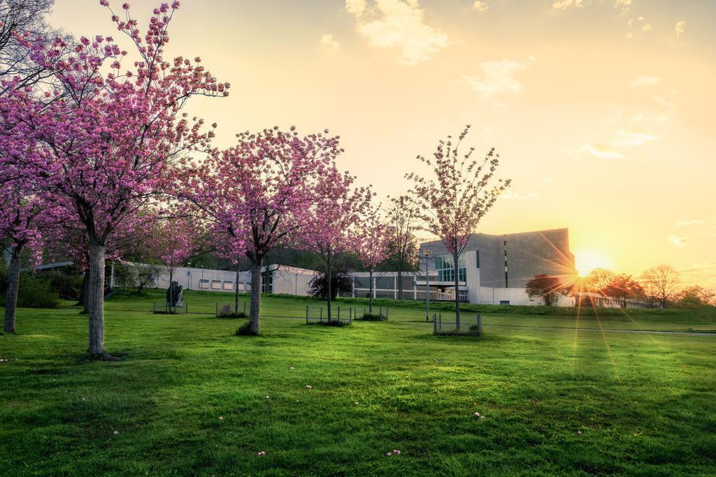 Kirschblüten am Theater