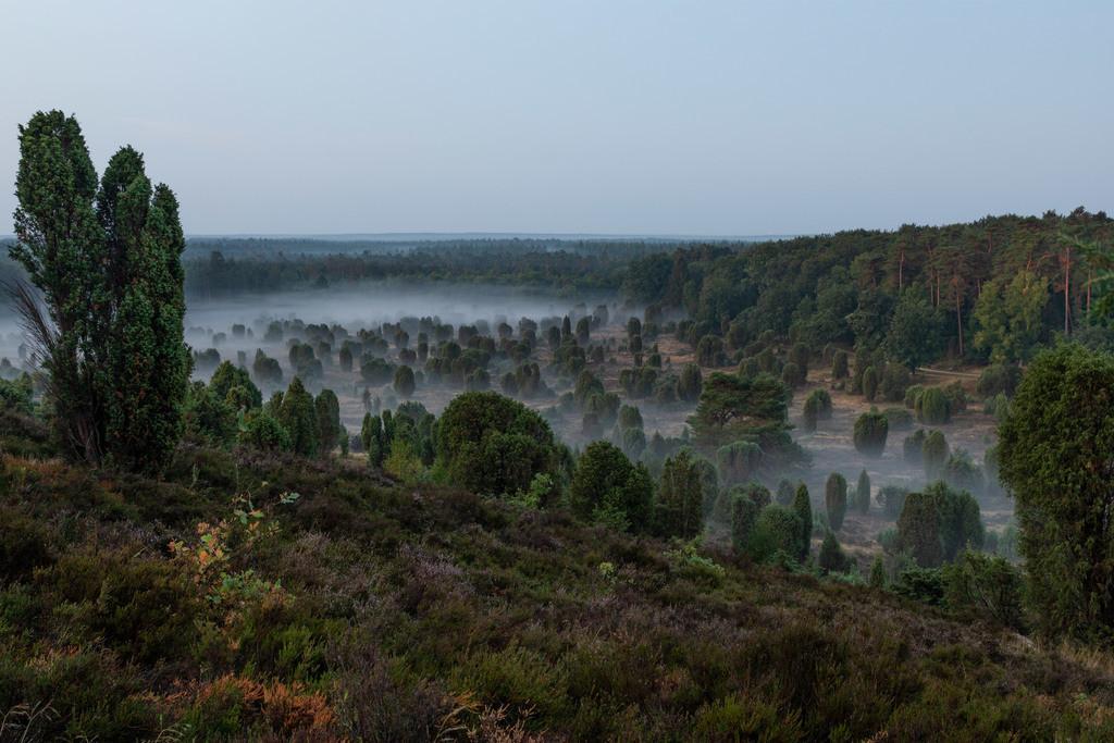 Lüneburger Heide | Totengrund in der Lüneburger Heide.