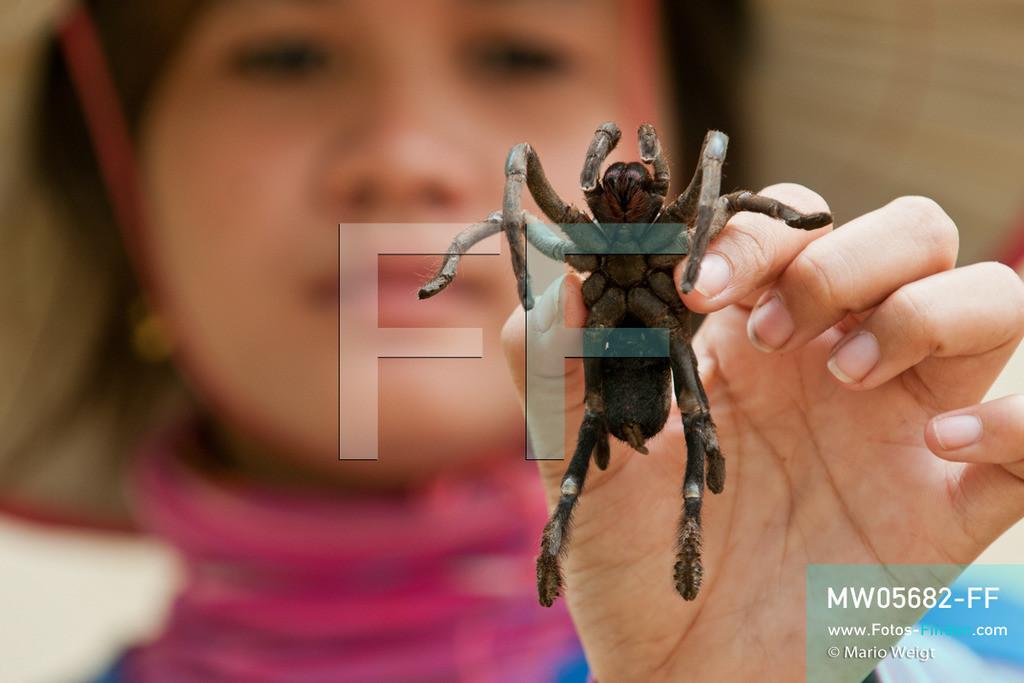MW05682-FF | Kambodscha | Provinz Kampong Cham | Skoun | Reportage: Phektra verkauft Vogelspinnen | Verkäuferin mit lebender Vogelspinne in ihrer Hand. Die 12-jährige Phektra lebt im Dorf Skoun, das für seine schwarzen frittierten Vogelspinnen bekannt ist. Phektra fängt und sammelt die Spinnen im Wald und verkauft die frittierten Achtbeiner an der Bushaltestelle.   ** Feindaten bitte anfragen bei Mario Weigt Photography, info@asia-stories.com **
