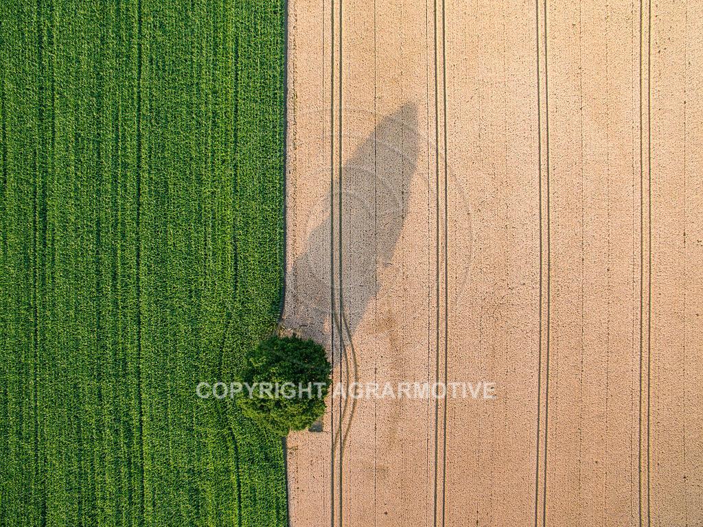 20180704-DJI_0027 | Landschaft mit Baum und Feldern aus der Vogelperspektive