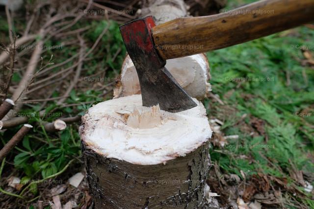 Gefällter Baum | Eine Axt steckt in einem Baumstumpf mit dem gefällten Baum im Hintergrund.