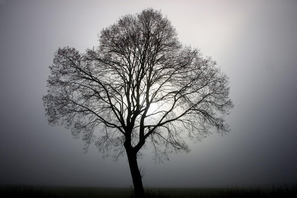 Baum im Nebel | Baum im Nebel