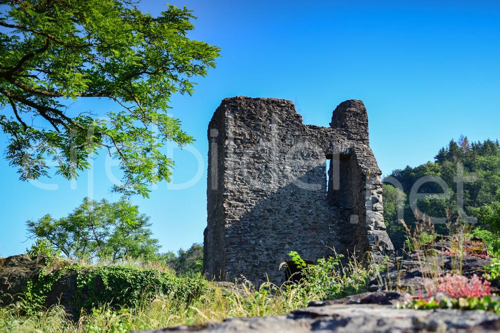 Burg Manderscheid | Teil der Oberburg, Bildkomposition mit einem Teil der Burgruine, Baum und blühendem Mauerpfeffer