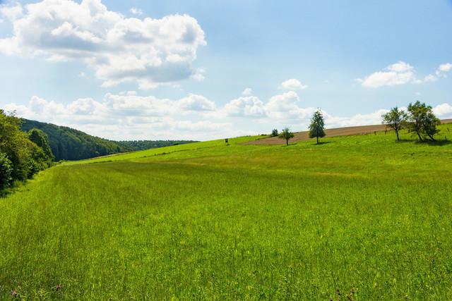 Landschaft und Himmel küssen sich.  | Die grüne Landschaft und der Himmel küssen sich. Grüne Felder am Waldrand.
