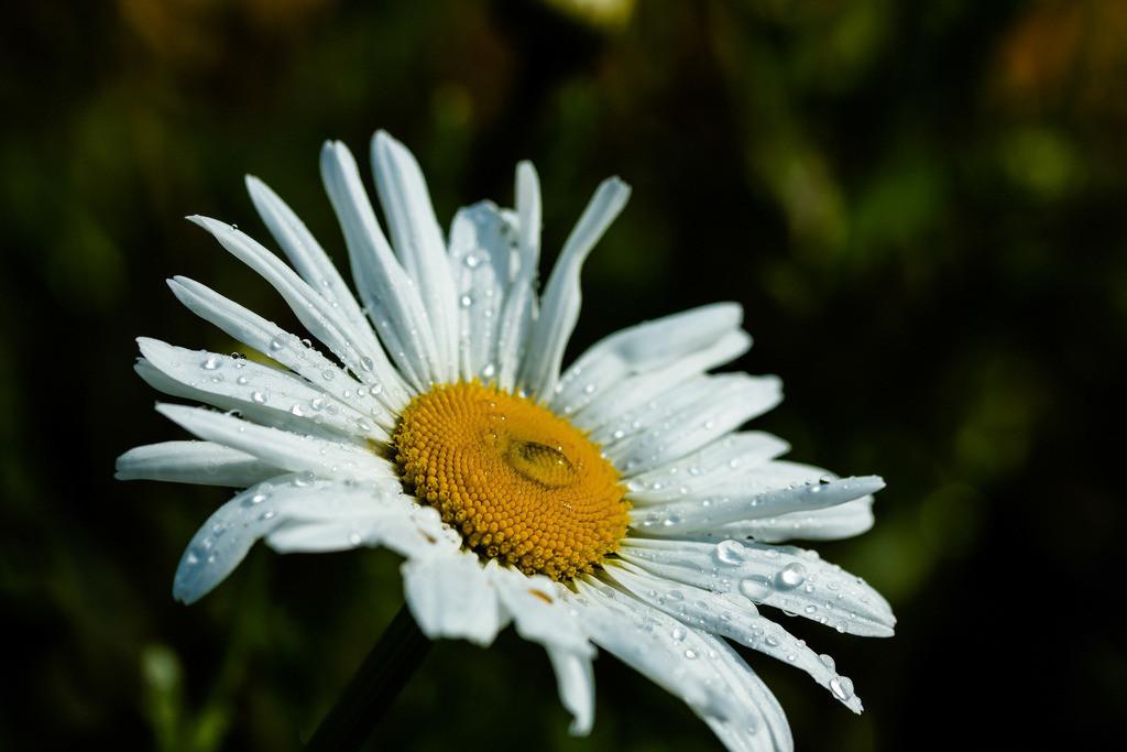 Der Sonne entgegen | Lerne dich dankbar freuen auch über die Freude, die du gehabt hast, und schreie nicht wie kleine Kinder »mehr!«, wenn sie gerade aufhört. Otto Eduard Leopold Fürst von Bismarck