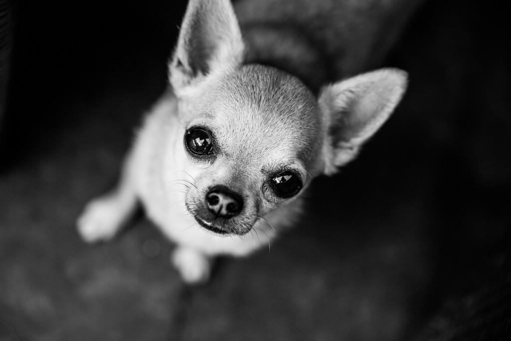 dogs--elmar.pics_8471