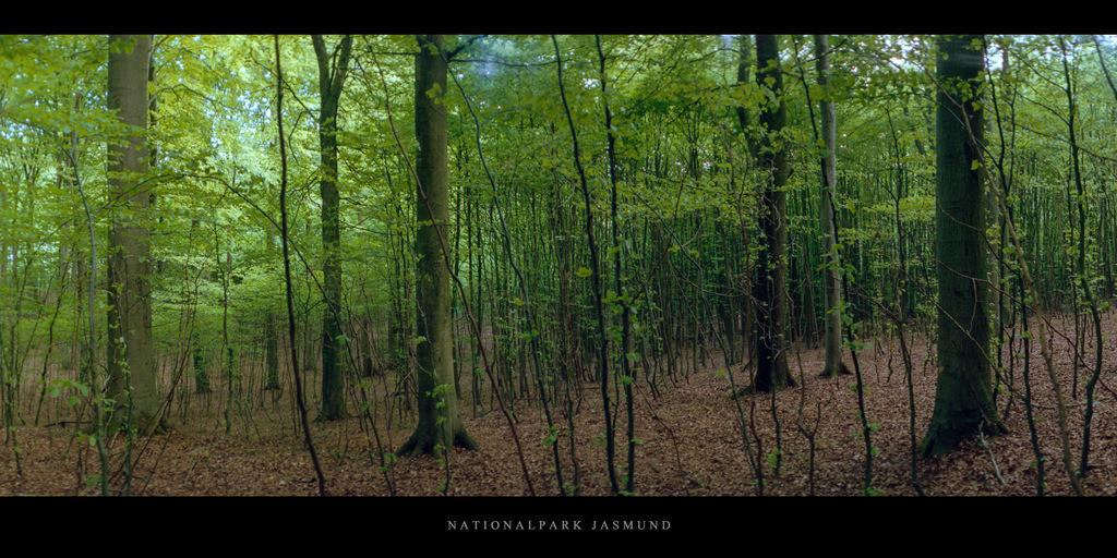 Nationalpark Jasmund   Buchen im Buchenwald und Nationalpark Jasmund auf Rügen