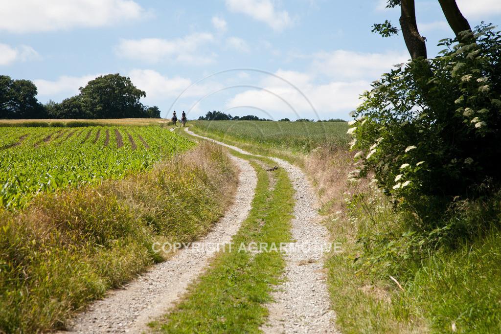 20090613-IMG_3181 | Symbolbild Zukunft - AGRARMOTIVE Bilder aus der Landwirtschaft
