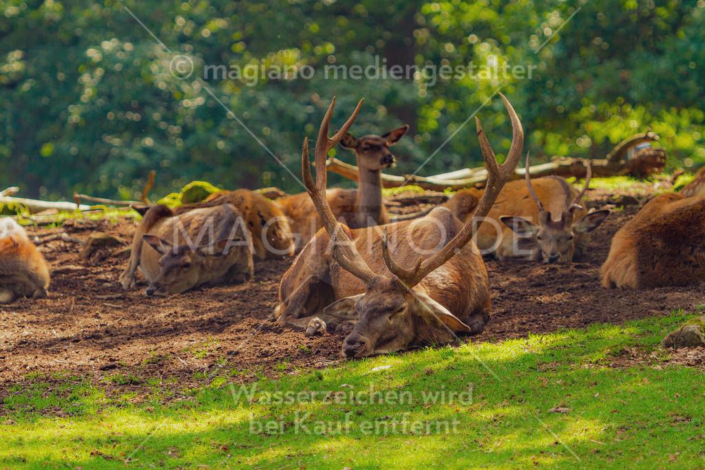 Wildpark-Kaiserslautern_20210918_0929