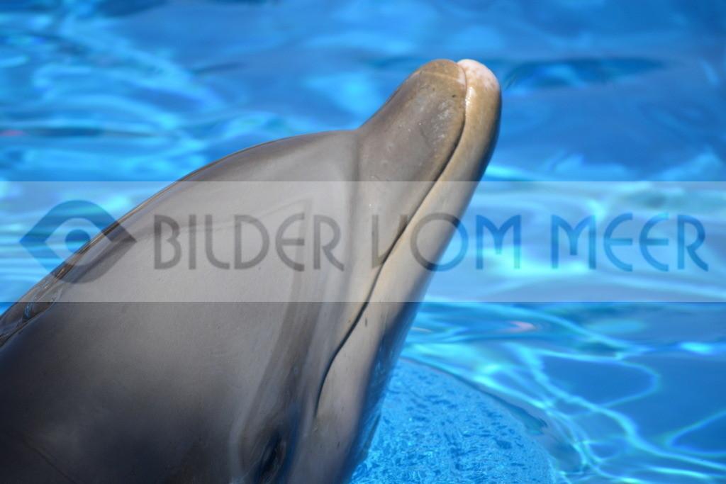 Delfin Bilder | Foto Delfin Spanien
