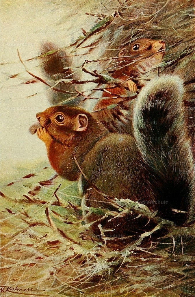 Kuhnert_ F.W. (1865-1926) - Wild Life of the World 1916 - St. Paul Squirrel
