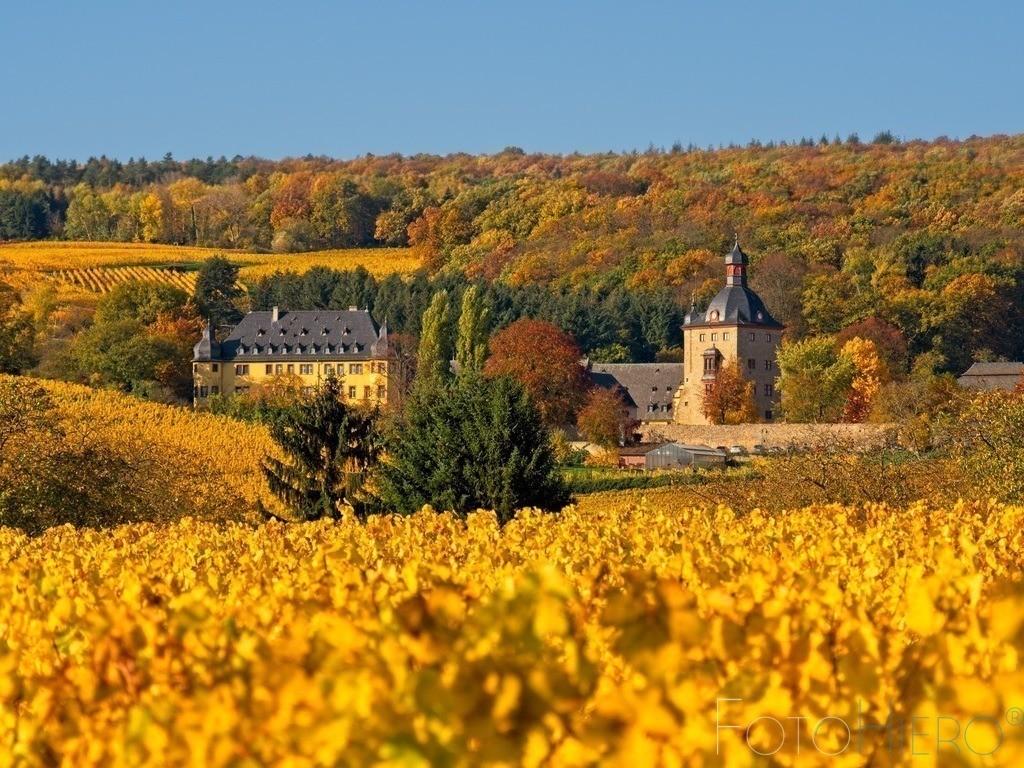 Schloss Vollrads  | Umgeben von Wald und Weinbergen liegt Schloss Vollrads im Rheingau