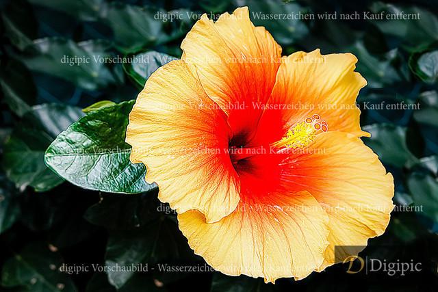 Gartenblume 1v | Blume