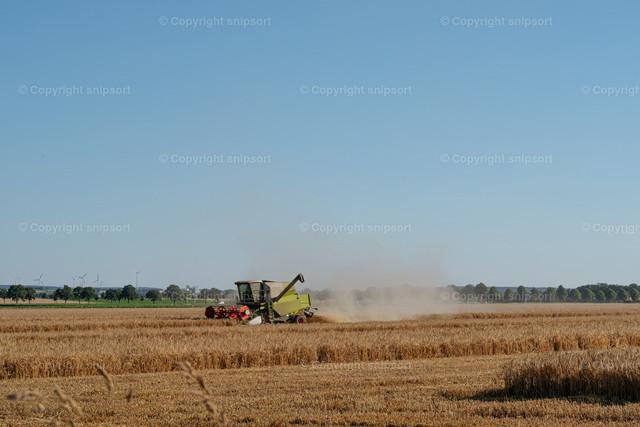 Mähdrescher bei der Ernte | Ein Mähdrescher fährt durch ein Weizenfeld bei der Ernte und zieht eine Staubwolke hinter sich her.