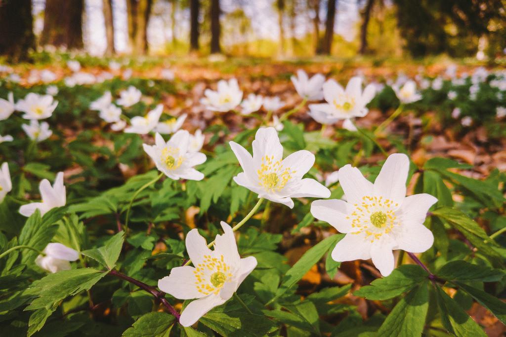 100-Blumen1