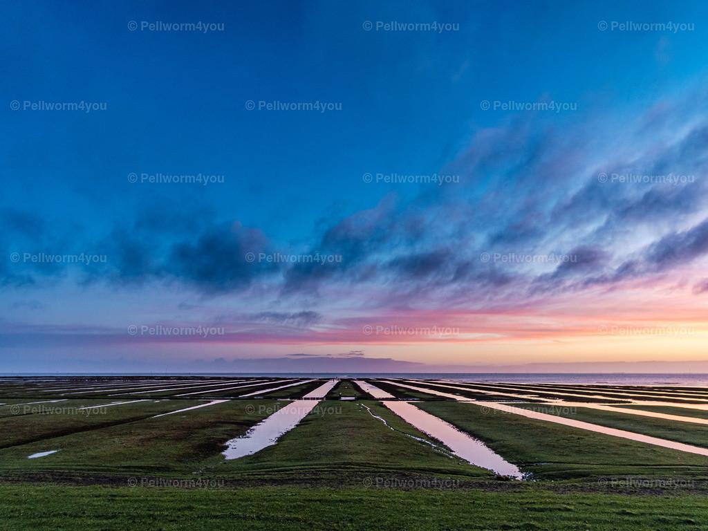 Salzwiesen am frühen Morgen