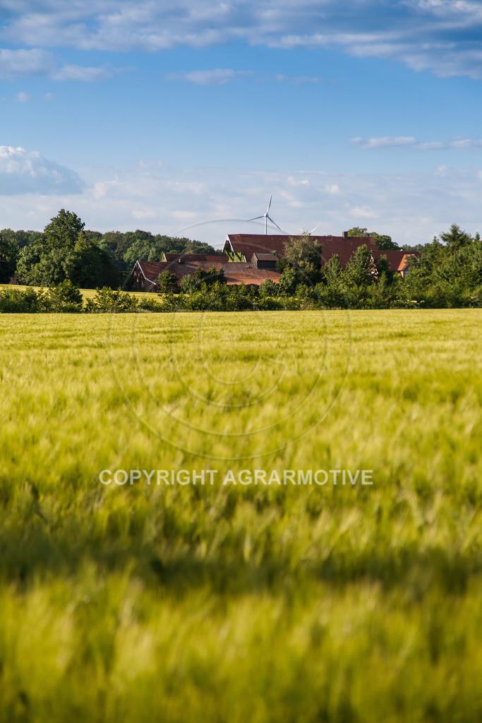 20090529-IMG_2090 | grünes Gerstenfeld vor der Abreife - AGRARFOTO