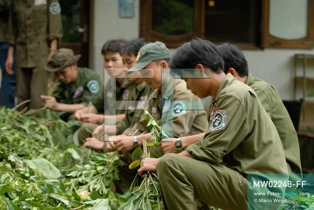 MW02248-FF | Vietnam | Provinz Ninh Binh | Reportage: Endangered Primate Rescue Center | Sei es für einen Rotschenkel-Douc-Langur, Hatinh-, Delacour- oder Cat-Ba-Langur, für jeden Affen wird ein individuelles Blätterpaket geschnürt. Der Deutsche Tilo Nadler leitet das Rettungszentrum für gefährdete Primaten im Cuc-Phuong-Nationalpark.    ** Feindaten bitte anfragen bei Mario Weigt Photography, info@asia-stories.com **