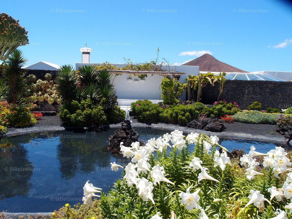 P5071392 | Garten von César Manrique