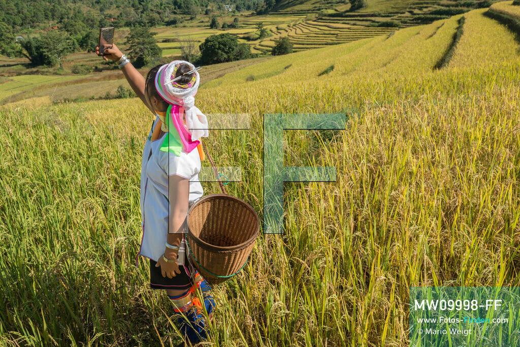 MW09998-FF | Myanmar | Loikaw | Reportage: Ringe fürs Leben | Frau der Volksgruppe Kayan Lahwi (Padaung) macht ein Selfie im Reisfeld  ** Feindaten bitte anfragen bei Mario Weigt Photography, info@asia-stories.com **