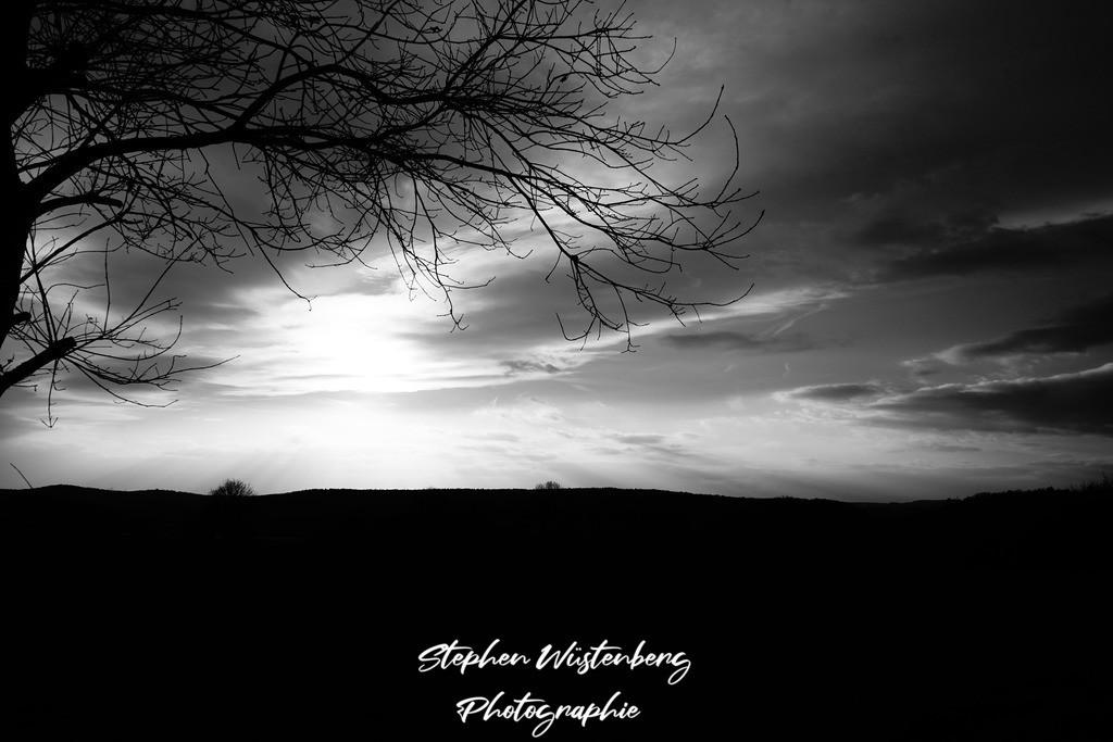Dark Nature | Schwarz-Weiss-Hochkontrast-Aufnahme bei Wartenberg-Rohrbach