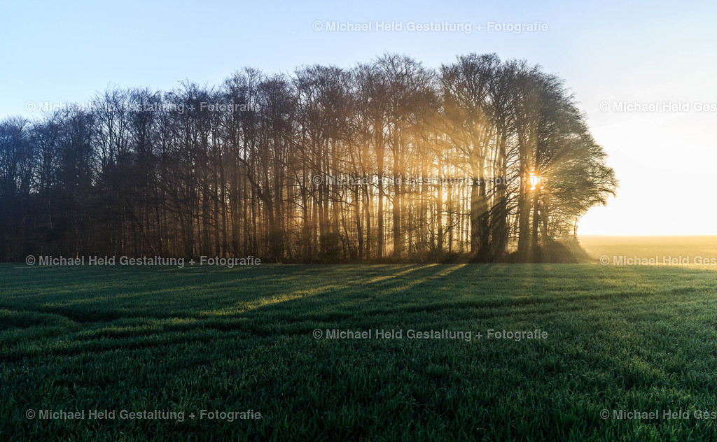 Sonnenaufgang am Wald