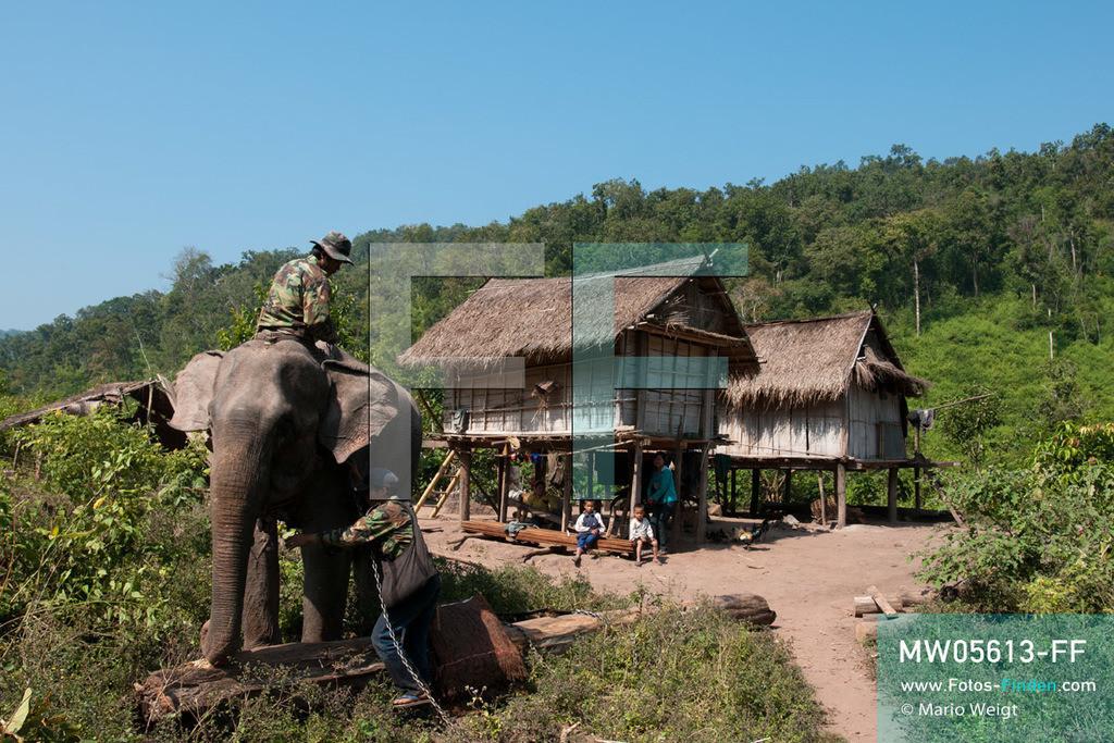 MW05613-FF | Laos | Provinz Sayaboury | Reportage: Arbeitselefanten in Laos | Einige Mahuts leben mit ihren Familien und Dickhäutern in Waldnähe. Lane Xang -