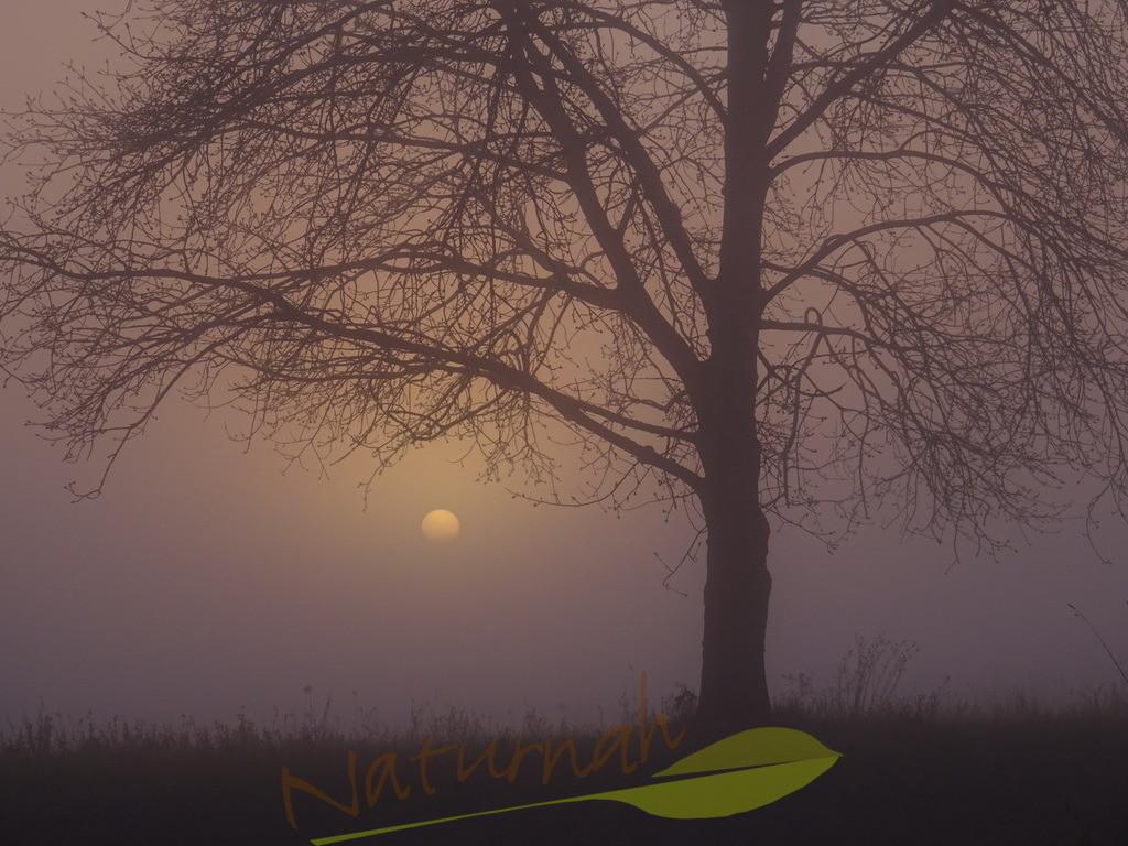 Nebelsonne mit Zauberbaum