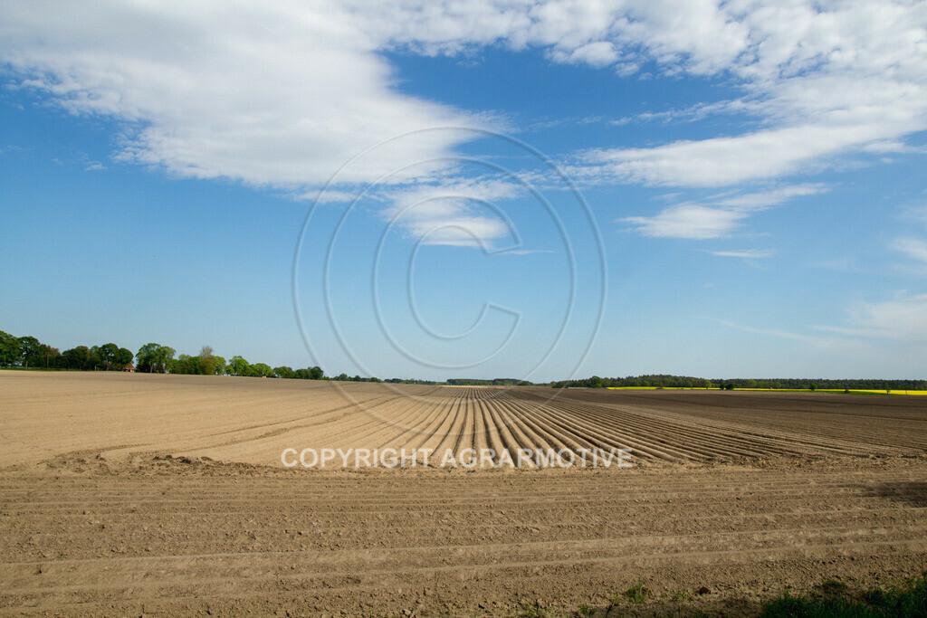 20130515-_MG_6672 | Kartoffelfeld im Frühling - AGRARFOTO BILDAGENTUR