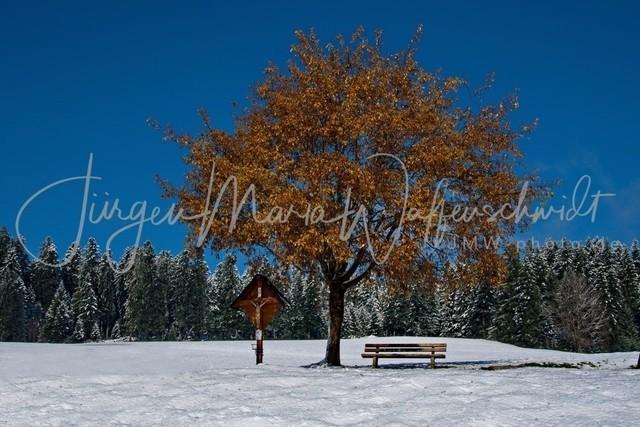 1030779_Baum_Winter_JMW_300
