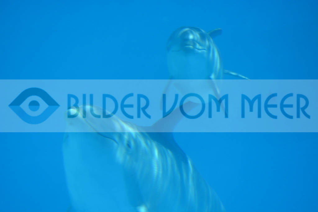 Delfin Bilder | Foto Delfin Baby Spanien