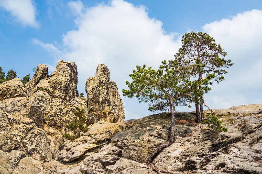 Landschaft mit Bäumen und Felsen im Harz | Landschaft mit Bäumen und Felsen im Harz.