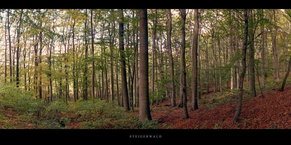 Buchenwald Steigerwald   Herbst im Buchenwald Steigerwald