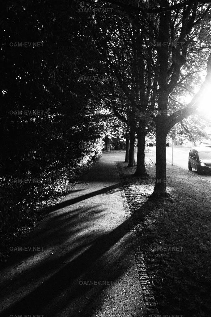OI000102-01 | Abendaufnahme in SW mit Gegenlicht durch Bäume und starken Schlagschatten die diagonal den Weg kreuzen