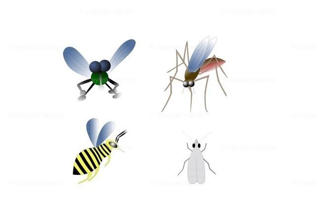 Insekten (Illustration) | Vier Fluginsekten über weißem Hintergrund.
